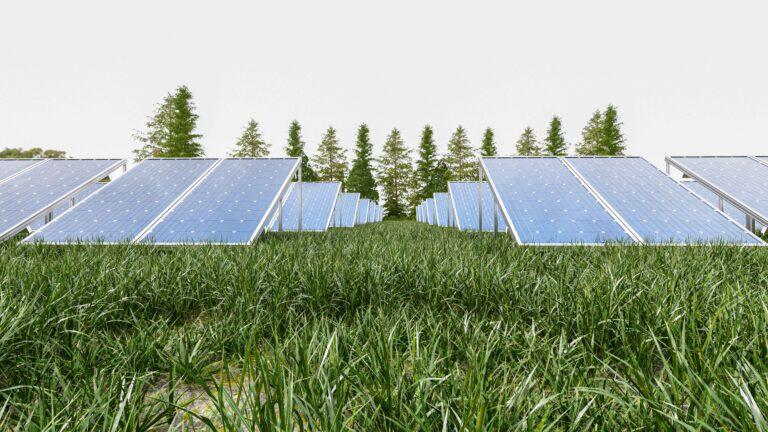 Paneles fotovoltaicos Murcia